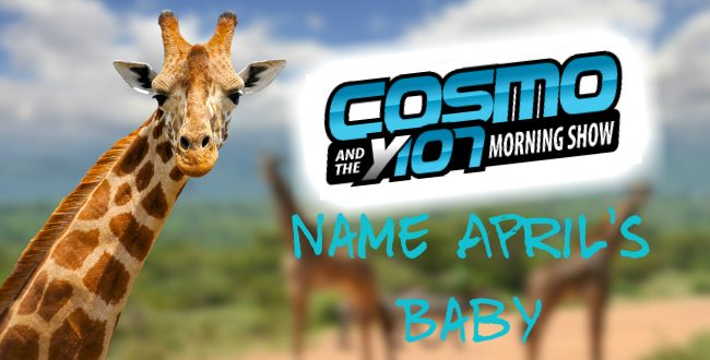 Giraffe with Cosmo and Y107 Morning Show logo