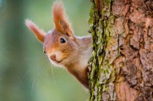 Squirrel get served ice cream