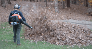 Dad Finds A Scary Surprise In the Leaf Pile