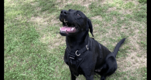Y107's Canine Connections – Izzy