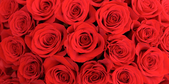 A bunch of roses reminiscent of the rose on the Bachelor