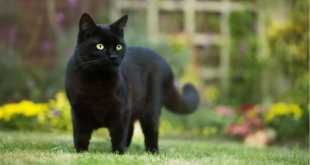 Close up of a black cat on the grass in the back yard