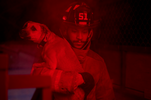 Fire Fighter carrying frightened dog from basement of smoke filled building