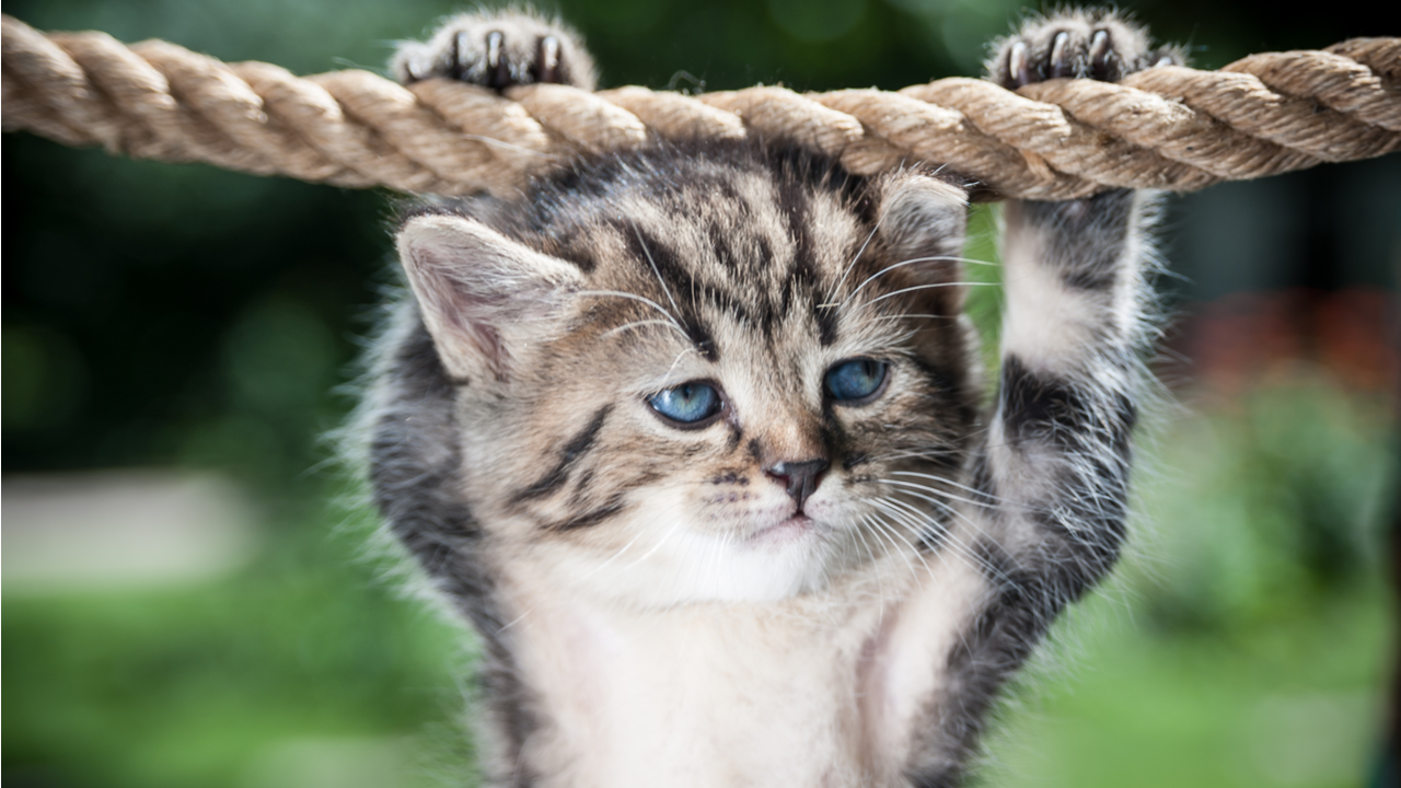 Stripy kitten hanging on the rope looking mean